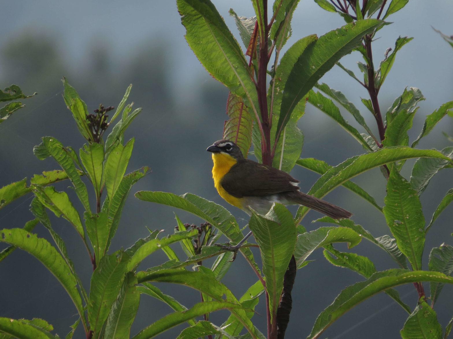 Bird in Foliage